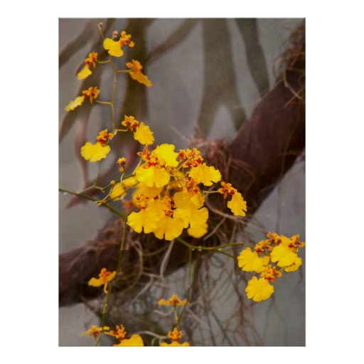 Orchid - Golden morning Posters