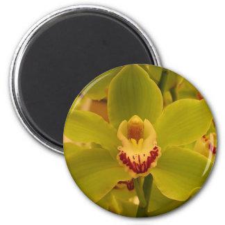 Orchid  Green Cymbidium Magnet