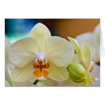 Orchid • Greeting Card