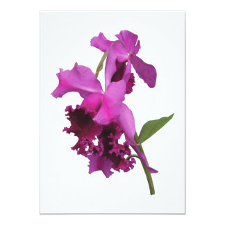 Orchid Harold Carls Card