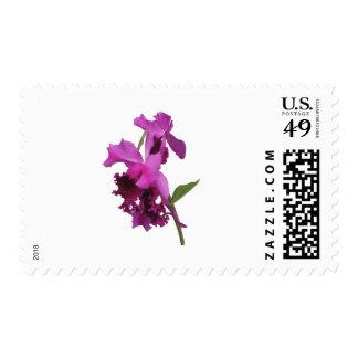 Orchid Harold Carls Postage