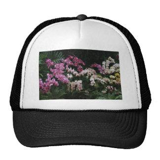 Orchid Trucker Hat