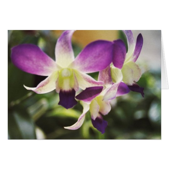 Orchid, Hawaiian Card