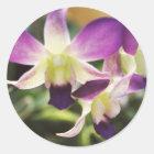 Orchid, Hawaiian Classic Round Sticker