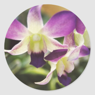 Orchid Hawaiian Round Sticker