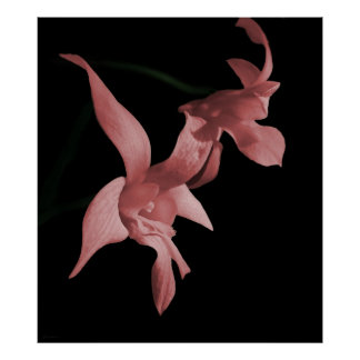 Orchid in Pink Photo Poster Print