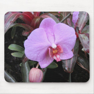 Orchid in the Garden Mouse Pad