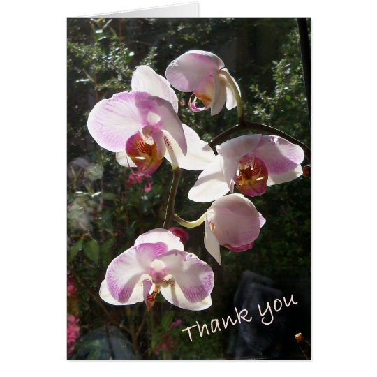 Orchid in the windown card