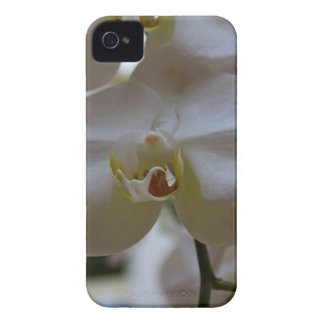 Orchid in White iPhone 4 Case