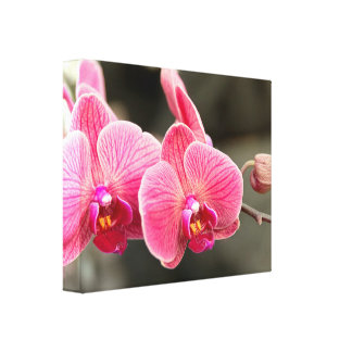 Orchid - It takes two to tango Stretched Canvas Print