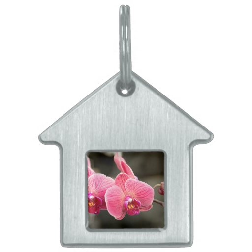 Orchid - It takes two to tango Pet Name Tag