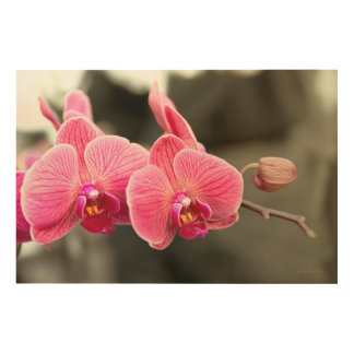 Orchid - It takes two to tango Wood Wall Art