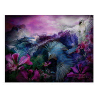 Orchid Jungle Art Postcard