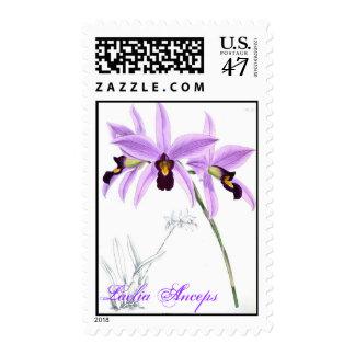 Orchid Laelia Anceps Postage