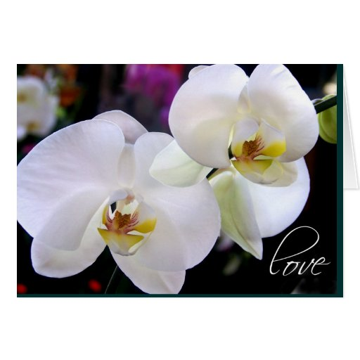 Orchid Love Cards