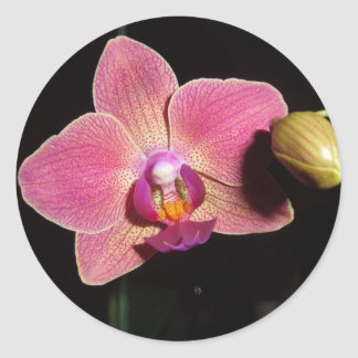 Orchid Love Flower Sticker Autism