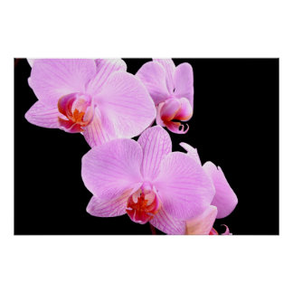 Orchid Love Posters