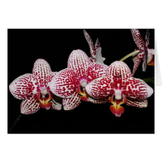 Orchid Lovers' Choice Card