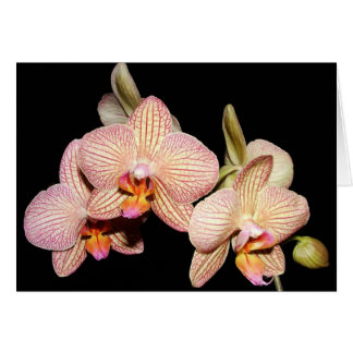 Orchid Lovers' Collection Card