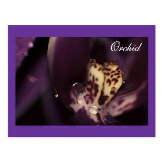 Orchid Macro, Floral & Waterdrops, template Postcard