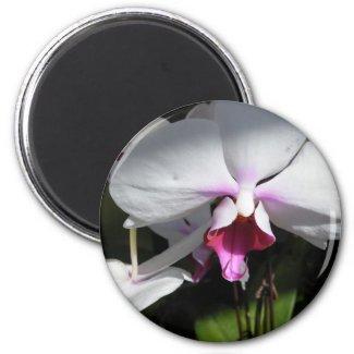 Orchid Magnet magnet