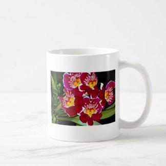 Orchid, miltonia hybrid  flowers classic white coffee mug