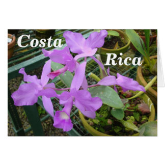 Orchid -- National Flower of Costa Rica Card