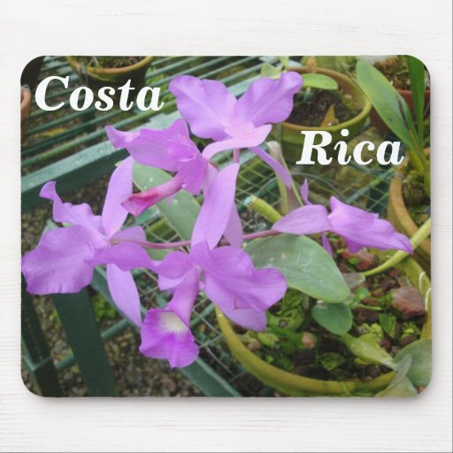 Orchid -- National Flower of Costa Rica Mouse Pad