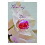 Orchid Note Cards