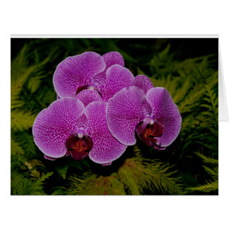 Orchid notecard. cards