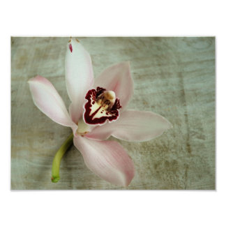 Orchid on Canvas Poster