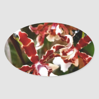 Orchid Oval Sticker