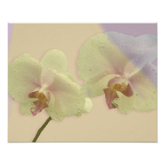 Orchid Pair Semi-Gloss Poster Print