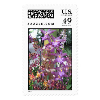 Orchid Path Large Stamp