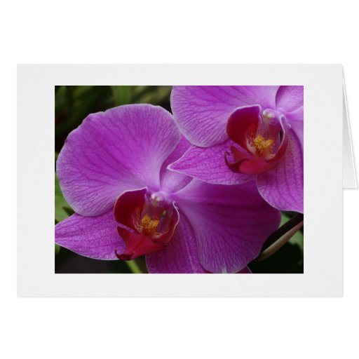 Orchid Perfection Greeting Card