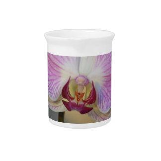 Orchid Petal Pitcher