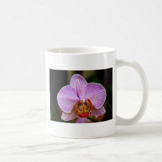 Orchid (Phalaenopsis) Classic White Coffee Mug