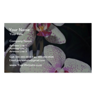 Orchid, phalaenopsis-hybrid (musterlandstern)  flo business card template