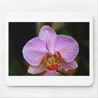 Orchid (Phalaenopsis) Mouse Pad