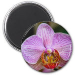 Orchid (Phalaenopsis) Refrigerator Magnet