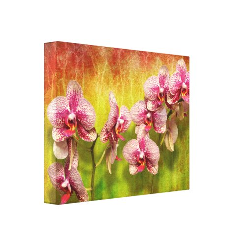 Orchid - Phalaenopsis - Simply a delight Canvas Print