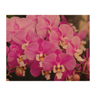 Orchid -  Phalaenopsis - Tickled pink Cork Paper Print