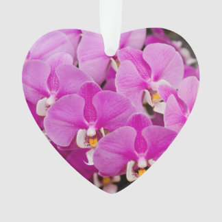 Orchid -  Phalaenopsis - Tickled pink Ornament