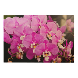 Orchid -  Phalaenopsis - Tickled pink Wood Wall Art