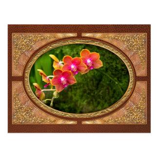 Orchid - Phalaenopsis - Tying Shin Cupid Postcard