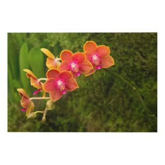Orchid - Phalaenopsis - Tying Shin Cupid Wood Wall Art