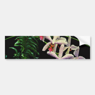 Orchid phalenopsis Vivian flowers Bumper Sticker