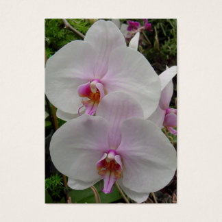 Orchid - Pink Blossom (Colossians 2:3) Business Card