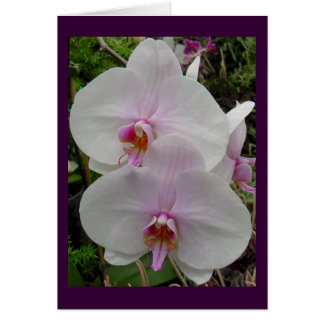 Orchid - Pink Blossom (Colossians 2:3) Greeting Cards
