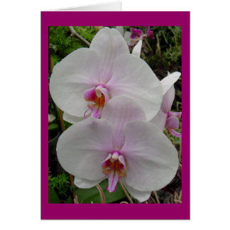 Orchid - Pink Blossom (Colossians 2:3) Greeting Card